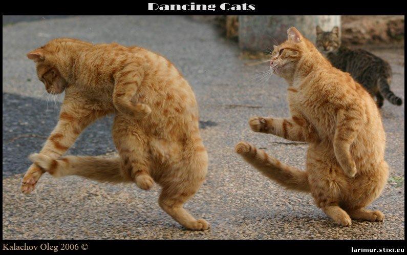 Картинки по запросу юмор танцы картинки